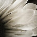 Abstract Daisy by Angela King-Jones