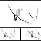 Collage - Ruby-throated Hummingbird - Immature Female - Black and White - Archilochus colubris  by MotherNature2