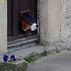 Dog Flap by Paul Gibbons