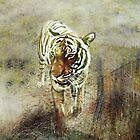 Tiger Walk by Susan Werby