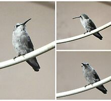 BIRD ON A WIRE by JAYMILO