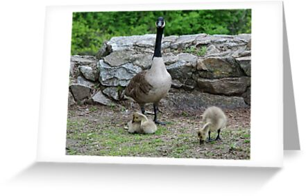 Family Portrait by Barry Doherty