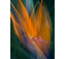 No longer earthbound, a soul takes flight Photographic Print