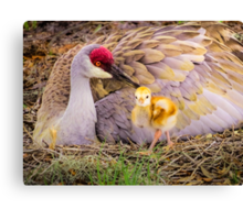 Mother's lovely touch Canvas Print