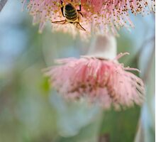 Upside down bee on a native flower by Tammee Berry