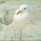 Seagull on the beach by RosiLorz