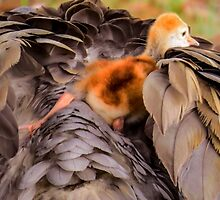 Looking for mother's warmth by Zina Stromberg