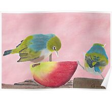"AndreaEL's ""Holding the Apple Up!"" in Pastel...  (Wax Eye NZ – Southland) Poster"