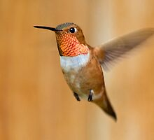 Hovering Rufous by Eivor Kuchta