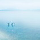 Lake Neuchatel  Switzerland by Angelika  Vogel