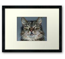 Mugshot Framed Print
