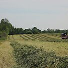 Hay Time by AbigailJoy