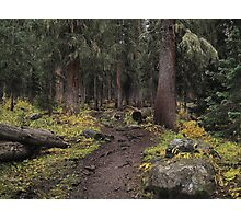 The High Forest Photographic Print