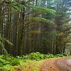 Great Otway National Park by Malcolm Katon