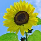 You Are My Sunshine by lorilee
