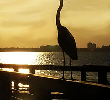 King of the Pier ~ Heron by SummerJade