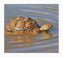 Tortoise Summer Swim - Natural Fun Kids Clothes