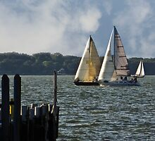 Lake Erie Sailing 2 by SRowe Art