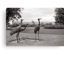 Tasmanian Emus—Government House, Hobart Tasmania Canvas Print