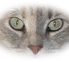 Cat's Eyes #9 by Barry Doherty
