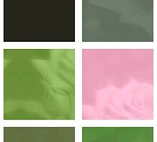 Pink Roses in Anzures 3 Abstract Rectangles 1 by Christopher Johnson