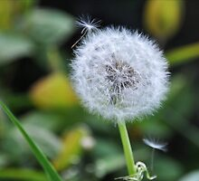 A Dandelion in the Rough by Hollie Burton