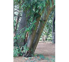 tree in the forest Photographic Print