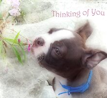 Thinking of You ~ Boston Terrier Greeting Card by Susan Werby