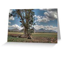 The Cazneaux Tree, Flinders Ranges, South Australia Greeting Card
