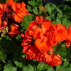 Red Geraniums by WildestArt