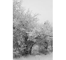 Frost Coated Trees Photographic Print