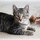 Koda, the kitten by Danielle Espin