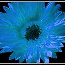 Blue Sun Flower by Danielle Espin