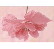 Pretty Pink Poppy Macro Photographic Print