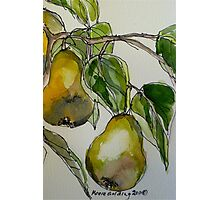 Pears. Detail.  Photographic Print