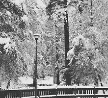 January Snow by januaryfirst
