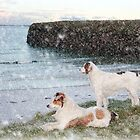 beach view with two dogs by morrbyte
