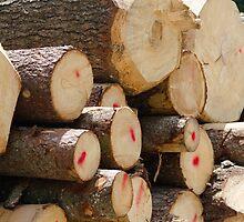 tree trunk by spetenfia