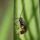 Parasitic Red Wasp ?? by AnnDixon