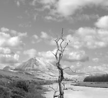 Errigal mountains and countryside in county Donegal by morrbyte