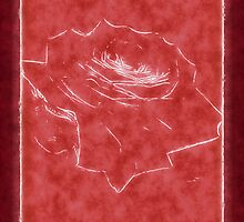 Pink Roses in Anzures 3 Outlined Red by Christopher Johnson