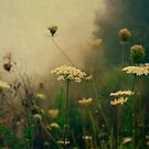 Summer Morning Fog by Olivia Joy StClaire