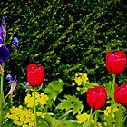 Late spring blooms by missmoneypenny