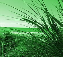 In The Reeds - Green by simzzuk
