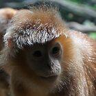 Monkey by Elisa Camera