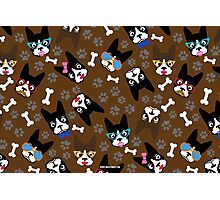 Boston Terrier Funny Faces Brown Photographic Print
