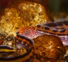 A young Wolf EEL by BravuraMedia