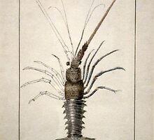Vintage Lobster Artwork by BravuraMedia