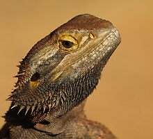 Bearded Dragon by DevineNature