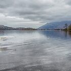 Male Mute Swan spreads his wings on Derwentwater by Peter Talbot